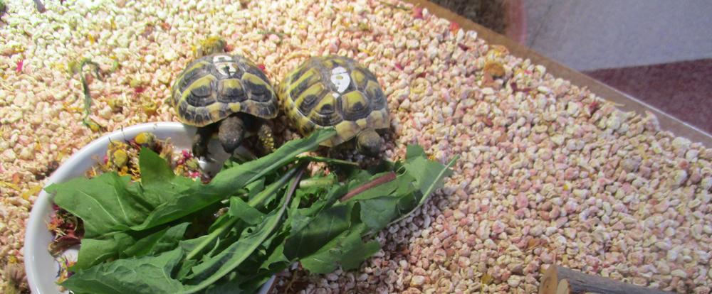 Ein neues zu Hause für zwei Schildkröten